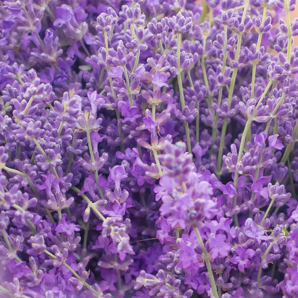 https://www.marketingmessages.com/wp-content/uploads/lavender-1.jpg